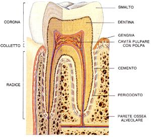 Parodontologia e Terapia parodontale
