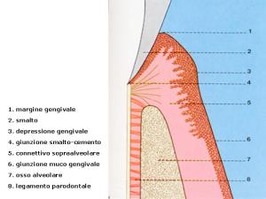 Parodontologia e Terapia parodontale2